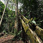 Leo Lanna率領團隊深入亞馬遜雨林中的克里斯塔利諾斯人自然遺產保護區,森林還維持著200年前未遭人為破壞的豐饒樣貌。© Projeto Mantis