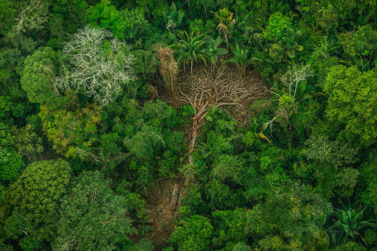 亞馬遜雨林是當地原住民族群社區、歷史及文化的根源,也是許多物種的生存之地,如今毀林行為及非法入侵,使森林生態環境和原住民家園備受摧殘。© Christian Braga / Greenpeace