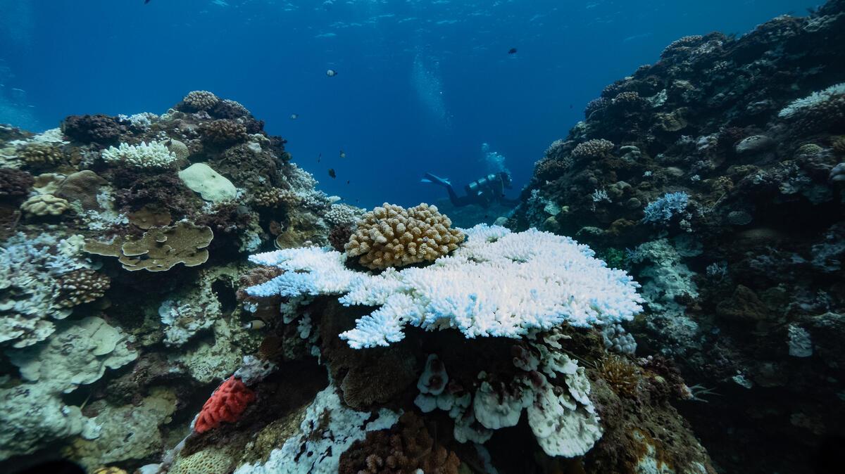 2020年5月以來,臺灣南部的水域溫度持續升高。綠色和平團隊於2020年8月,前往墾丁的三個潛水地點,拍攝記錄珊瑚因全球暖化發生的白化現象,成為首批受害者。© Lion Yang / Greenpeace