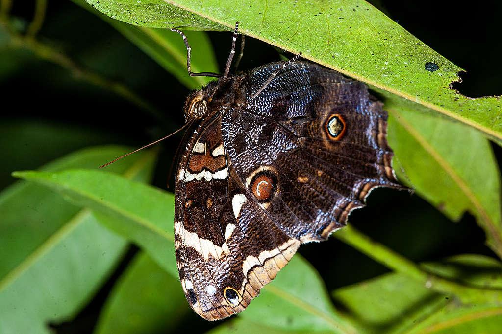 亞馬遜生態群系物種豐富,有成千上萬的生物生存在此,其中更包括許多特有種。© Projeto Mantis
