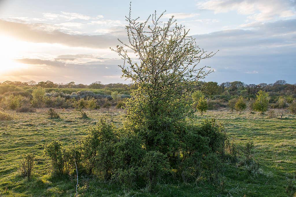 英國西薩塞克斯郡中,位於聶普的野生荒地(Knepp Wildland)。