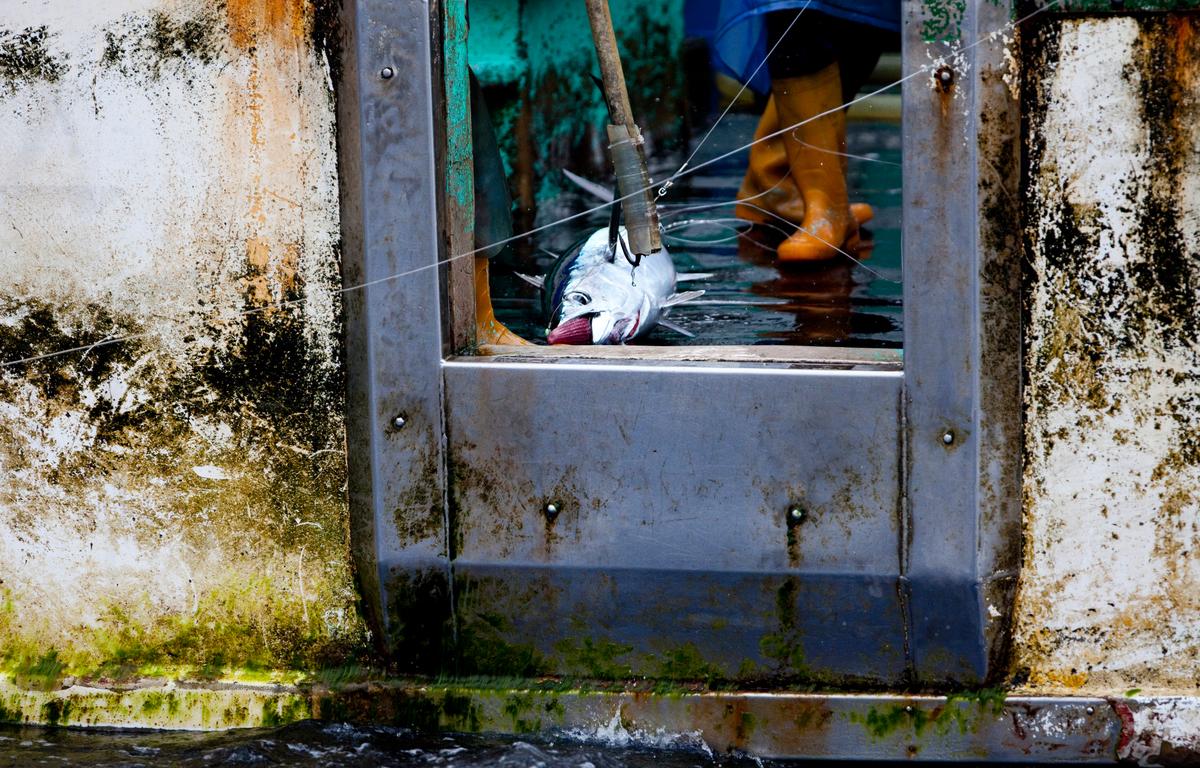 遠洋上的漁船,至今仍有強迫勞動、暴力對待漁工的情形發生,卻因管理疏失而使外籍漁工求助無門。