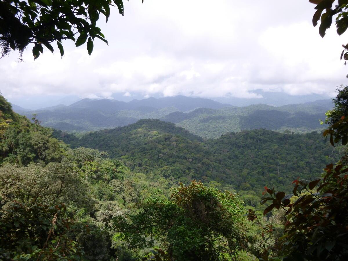 剛果盆地擁有全球第二大熱帶雨林,為中非數百萬人民提供飲食、水源,更是許多瀕危生物的家園。© San Diego Zoo Global / Daniel Mfossa