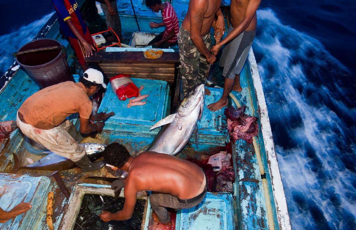綠色和平調查發現,強迫勞動時常與非法漁業有關,由於海上缺乏嚴格監管,使漁工人權被剝削的情況屢屢發生。