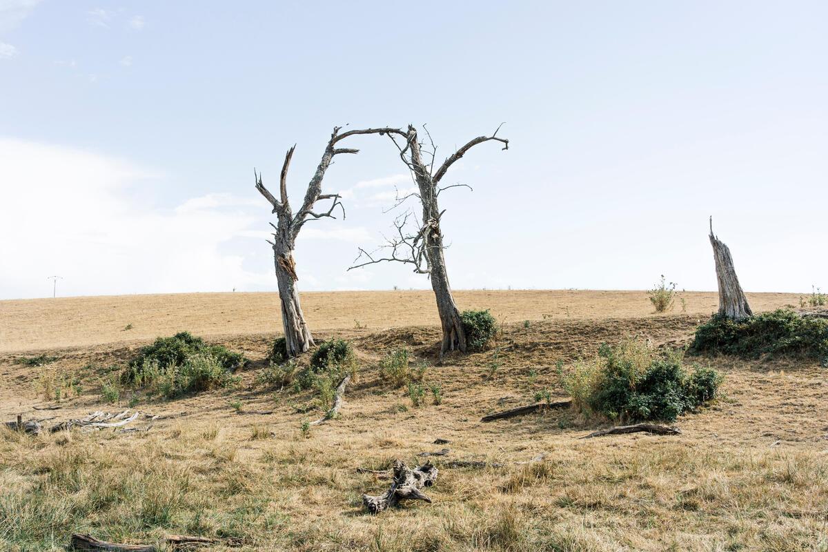 2020年8月,法國出現熱浪乾旱,乾枯的樹葉、土地和樹木,顯示生態受到的衝擊。