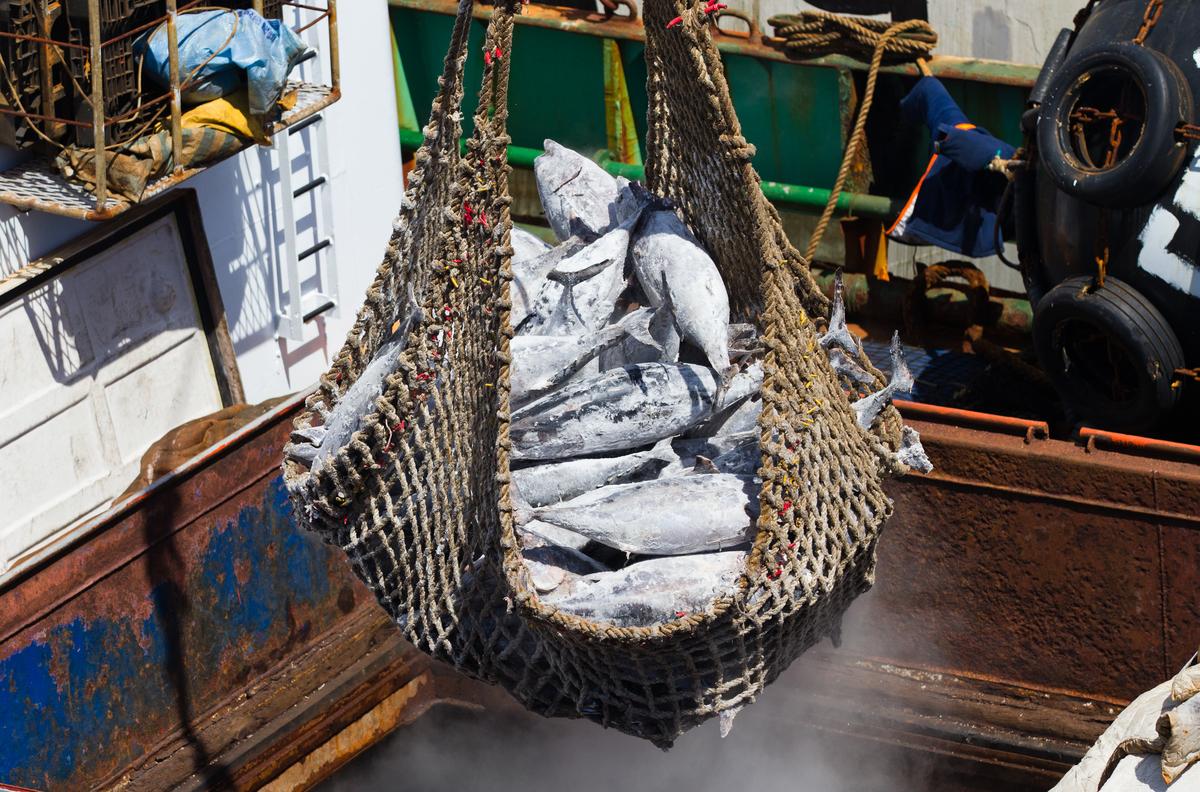 臺灣多年來面對遠洋漁業問題,都抱持消極的心態,但近年來頻頻受國際間警告,尤其是歐盟和美國等漁獲出口主要市場。