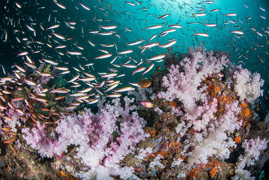 綠色和平聯同英國牛津大學、約克大學率領的科學研究團隊,經過數據匯整與驗算,發布《30x30 海洋保護藍圖》報告,指出若要保護海洋,必須在2030年前將至少30%海洋設立為保護區,不受人為侵擾。