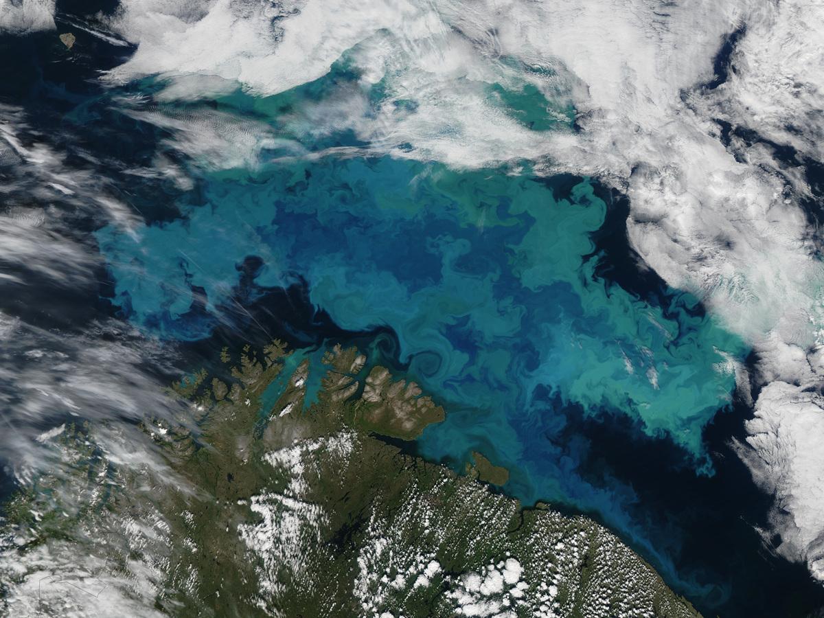 位於北冰洋的巴倫支海(Barent Sea),海中生長大量浮游植物,為地球製造氧氣。