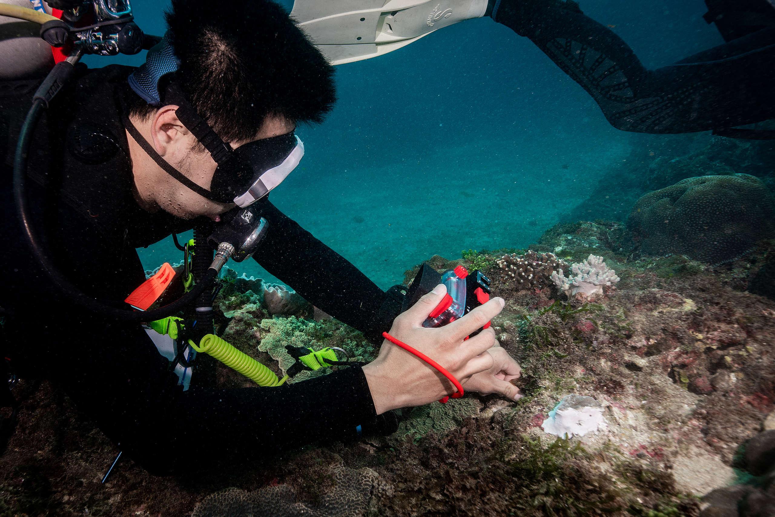 綠色和平與潛水教練和海洋生物學家合作,除了拍攝記錄珊瑚白化情形,也加入海生館珊瑚復育團隊,從旁觀察與協助復育工作。