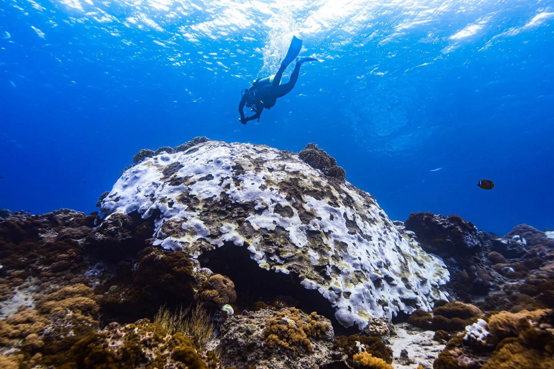 邱聰榮在海中親眼看見珊瑚礁白化的情況,短短4年內的變化如此巨大,讓他心情很複雜。