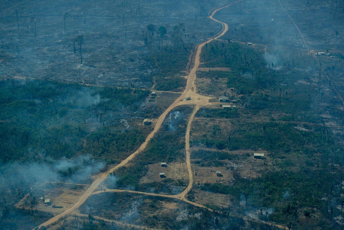 巴西亞馬遜地區的毀林面積連續三年持續擴大,2021年1月至5月間的伐林量比起去年同期增加了14.6%,而6月則是亞馬遜森林自2007年以來,起火點數量最多的月份。© Christian Braga / Greenpeace