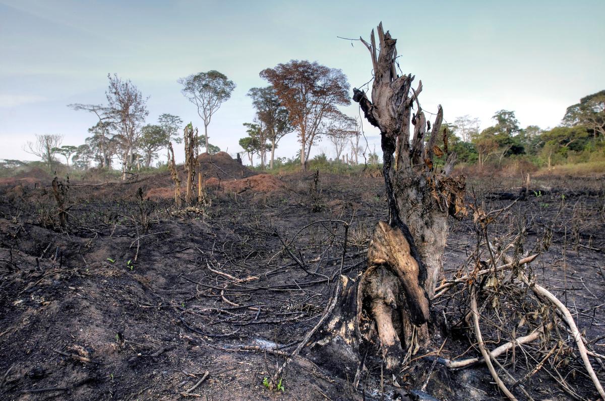 在2000年至2014年之間,剛果盆地的森林損失約有93%是由當地農民以砍伐、火燒方式清空林地造成。© Thomas Einberger / argum / Greenpeace