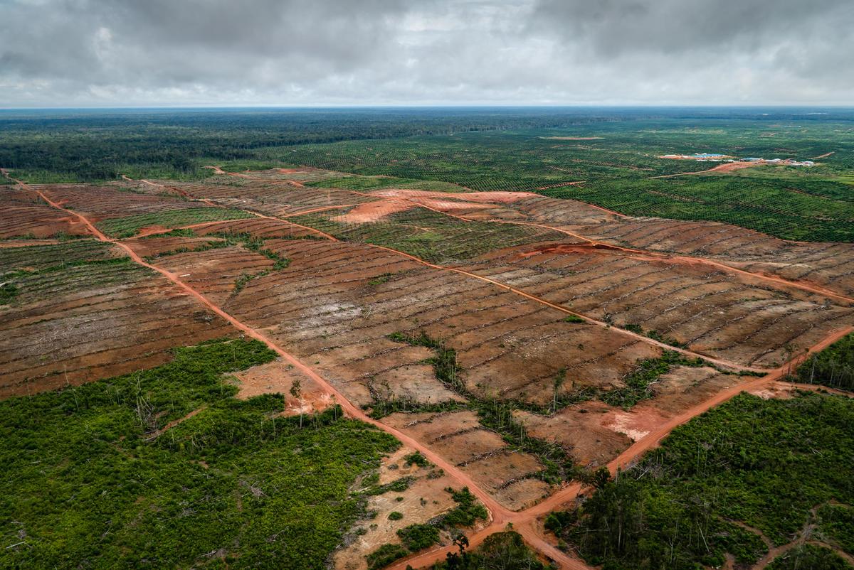 Korindo集團擁有巴布亞最大的油棕櫚種植園,自2001年以來已摧毀該省約57,000公頃的森林。© Ulet Ifansasti / Greenpeace