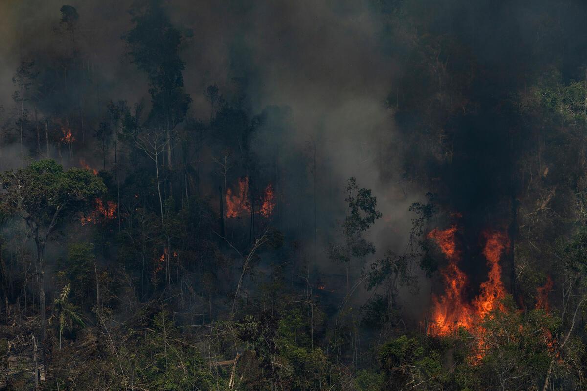 綠色和平巴西辦公室、亞馬遜觀察組織與氣候觀測站組成團隊,於2021年9月13日至17日深入亞馬遜森林,以空拍記錄下毀林罪證。
