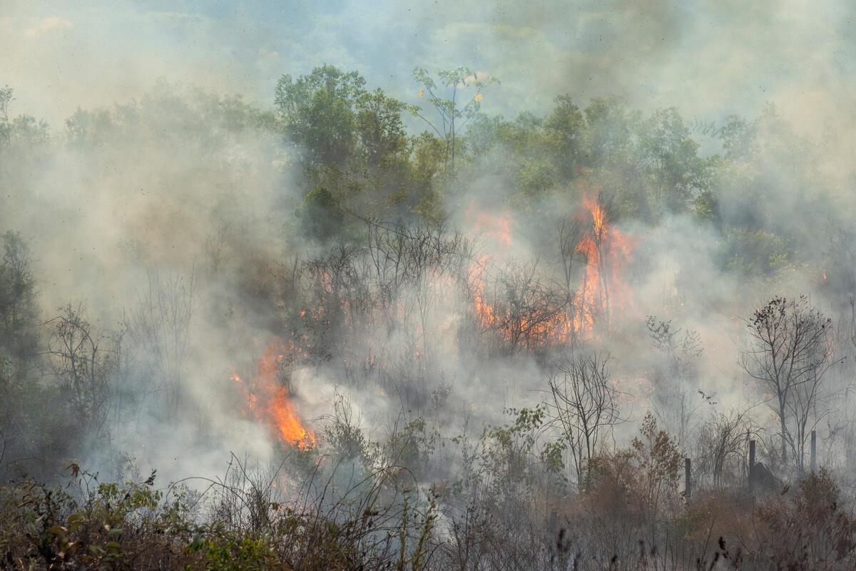 2020年8月18日,綠色和平調查團隊空拍記錄亞馬遜大火實況,大片蔥鬱樹林被燒得焦黃,濃煙瀰漫。