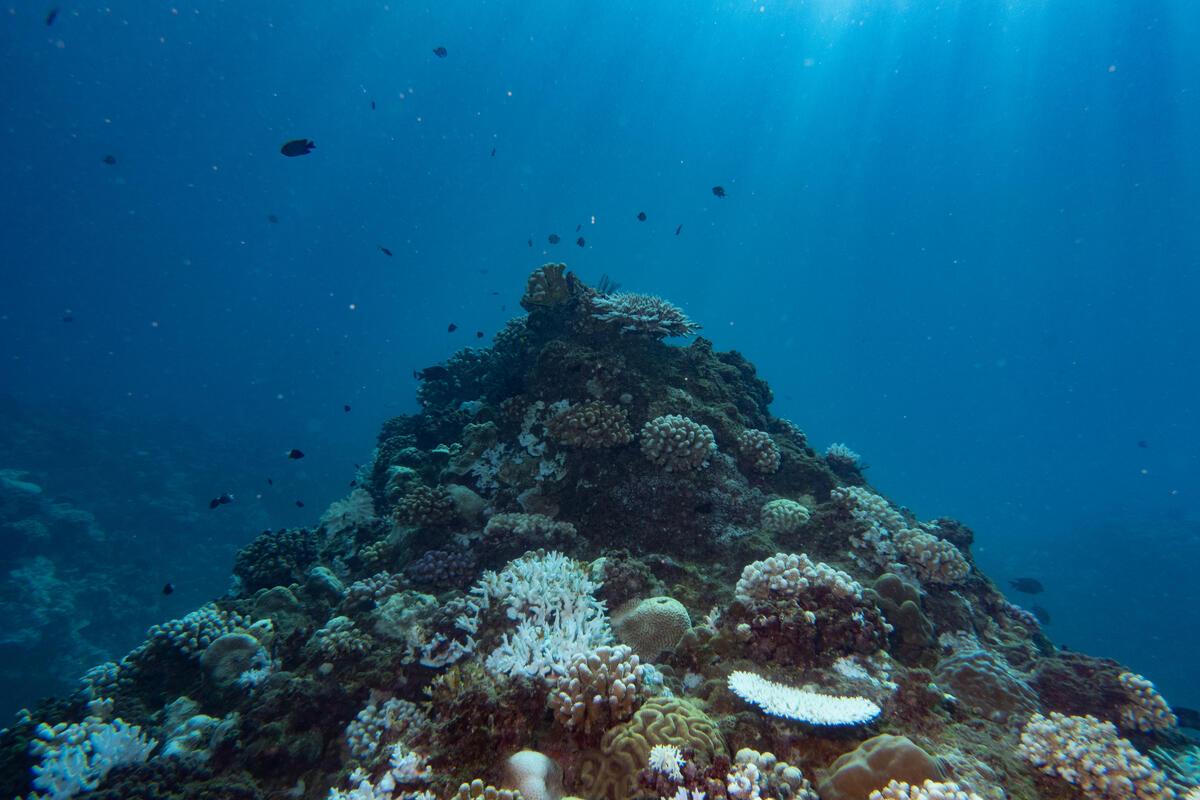 自2020年5月以來,臺灣南部的水域溫度持續升高,綠色和平拍攝的照片記錄了2020年8月,臺灣墾丁的三個潛水地點已發生珊瑚白化現象,深度包括五公尺,十公尺和十八公尺,海洋溫度皆高於攝氏28度,最高可達31度。