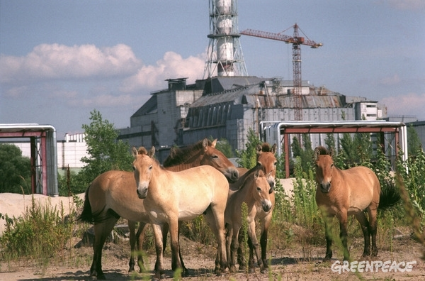 Wild Horses in Pripyat © Vaclav Vasku / Greenpeace