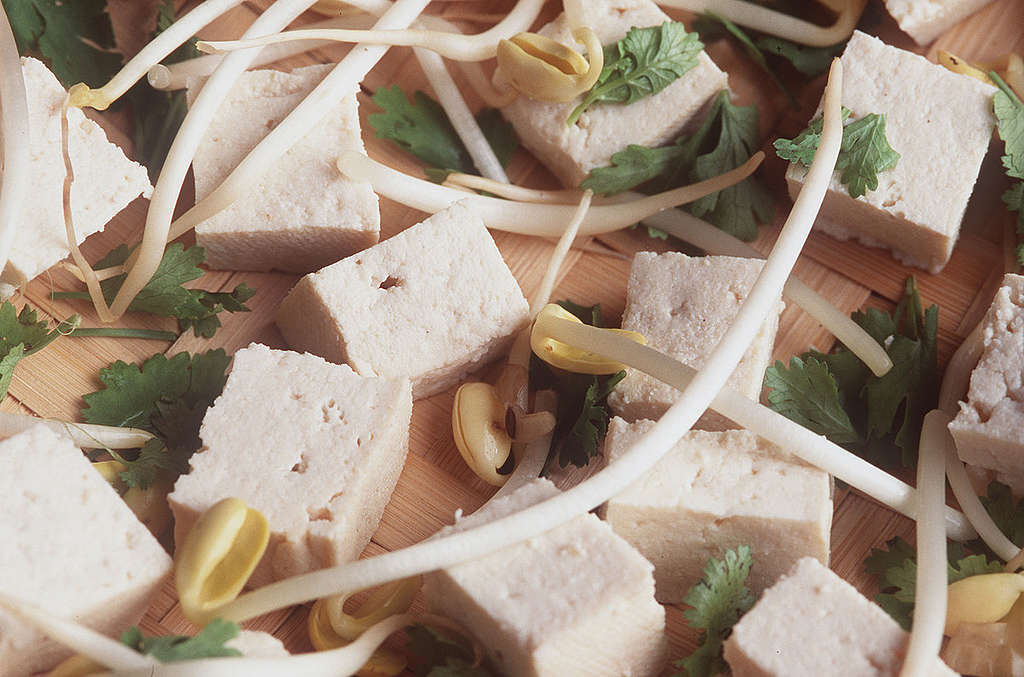 Tofu and Soy Sprouts. © Greenpeace / Fred Dott