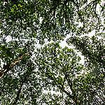 Hambach Forest in Germany. © Bernd Arnold / Greenpeace