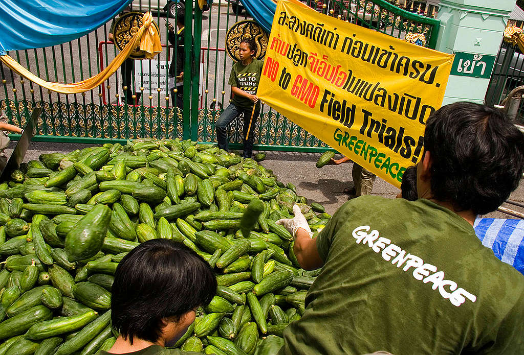GE Papayas Action in Bangkog. © Greenpeace / Vinai Dithajohn