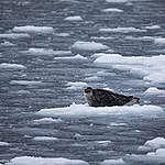 Kuzey Kutbu buzullarında ölçülen en düşük 2. seviye