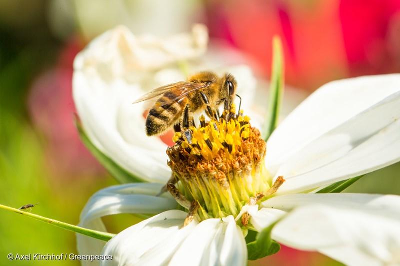 Arılar hakkında 10 ilginç bilgi