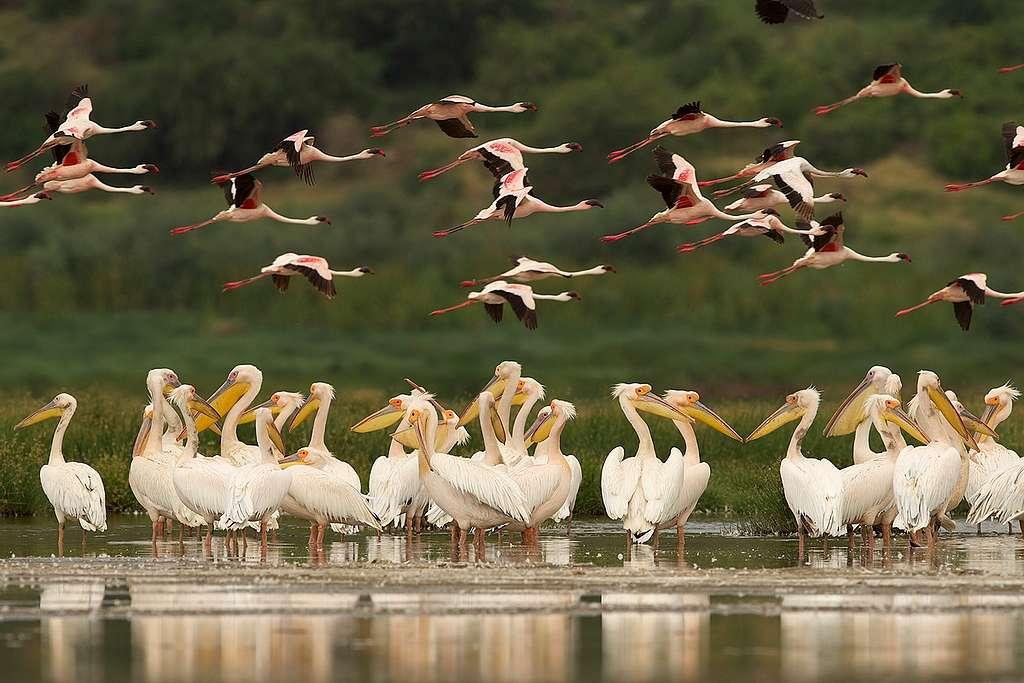 Tanzanya'da Savan. © Markus Mauthe / Greenpeace
