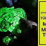 Şirinleri görmek üzeresin: Türkiye'deki müthiş mantar türleri