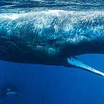 8 Haziran Dünya Okyanus Günü