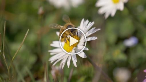 Episode 4 - Biodiversity is Life 🌱