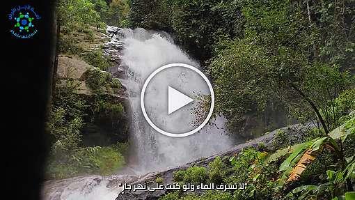 الحلقة 5 - إرساء ثقافة زرع الأشجار 🌲