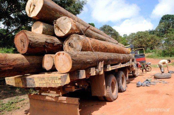 Indigenous community clashes with loggers in the Amazon