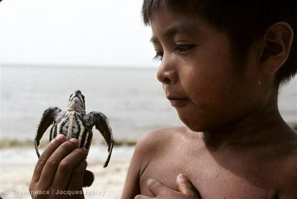 Boy holding leatherback turtle hatchling, French Guiana, 1980