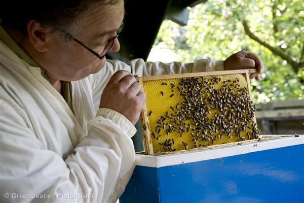 Beekeeper in the NetherlandsImker in zijn Imkerij
