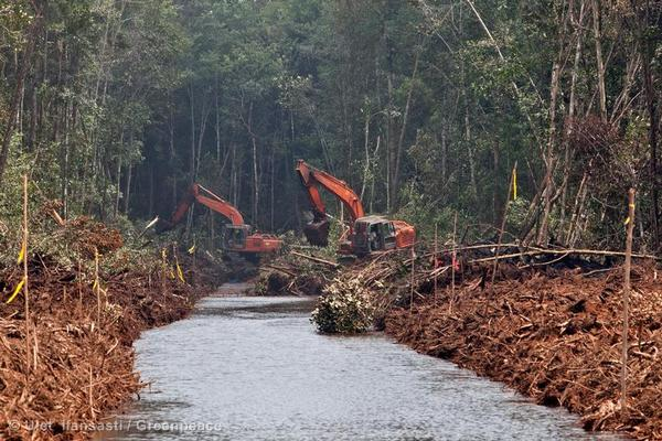 Forest Clearance in Kalimantan, Indonesia