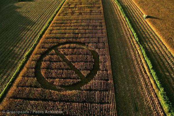 GE Crop Circle Action Against GM Corn (Spain: 2006)