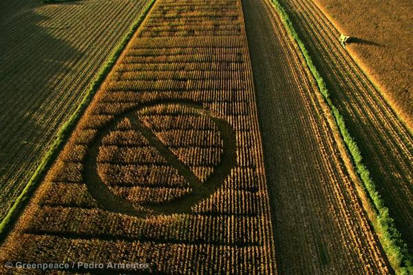 GE Crop Circle Action Against GM Corn (Spain: 2006)