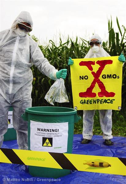 Illegal GE Crops Quarantined in Italy