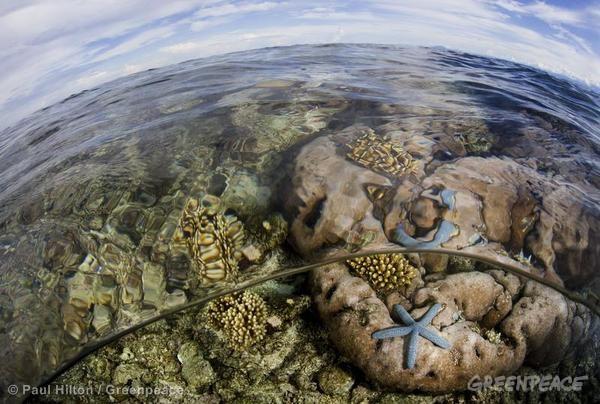 Pristine Reefs in Cenderawasih Bay