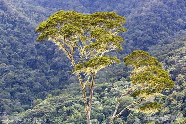 Forest in Papua