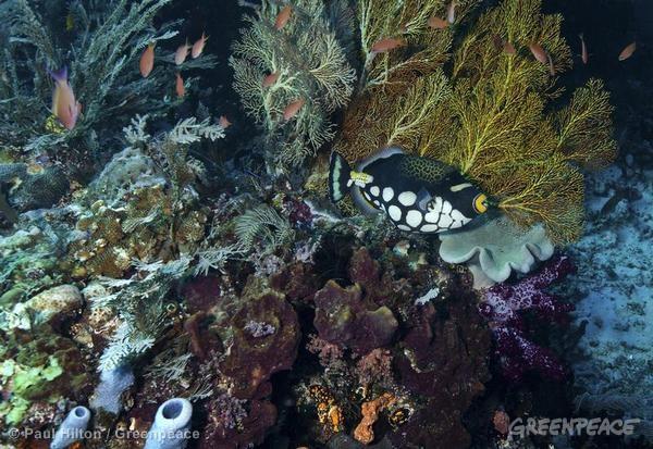 Coral Reef at Dampier Straight Raja Ampat