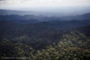 Tropical Rainforest in Sumatra
