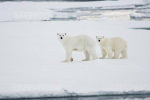 Greenpeace was in the Arctic to document the lowest sea ice on record, a low point projected to pass again this summer.