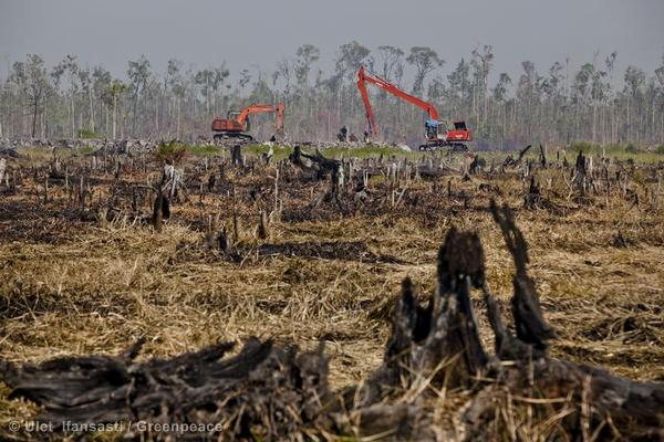 Forest Clearance and Peatland Drainage in Palm Oil Plantation in Riau, Sumatra