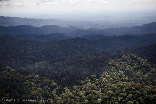 Tropical Rainforest in Sumatra