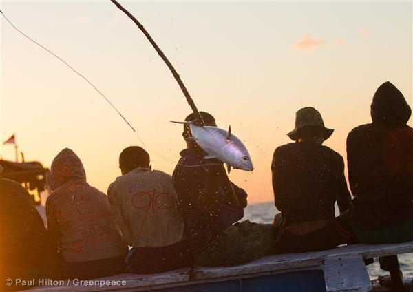 Pole and Line Fishing in Indonesia