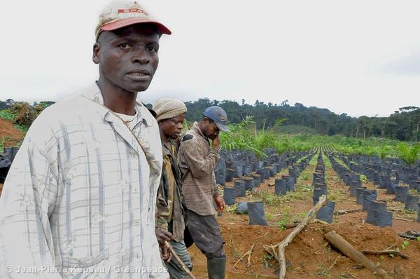 Villagers Visit Oil Palm Plantation in Cameroon