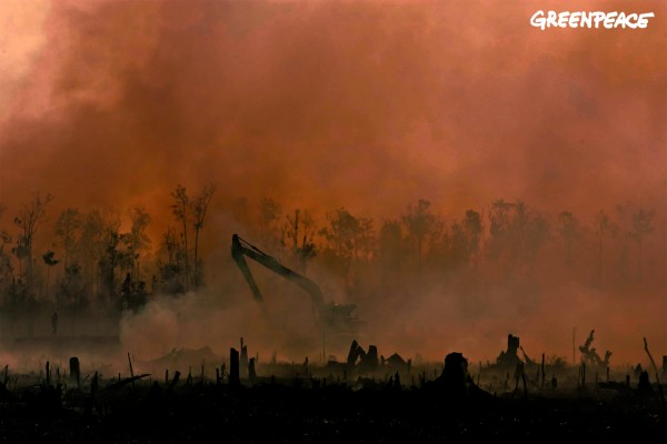 Smoke from smoldering fires obscures an excavator digging a peatland drainage canal at an oil palm plantation in Riau, Sumatra.