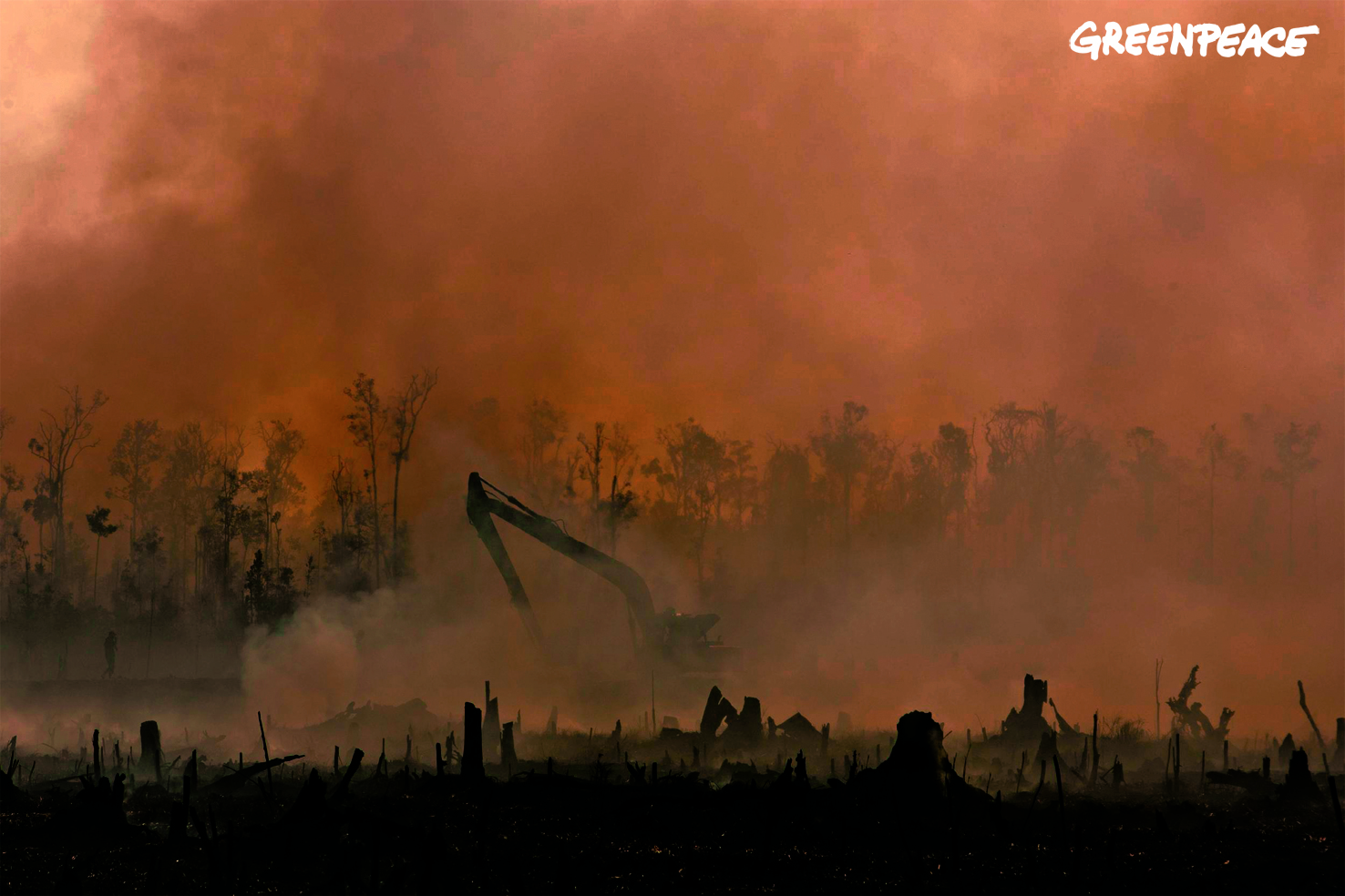 Deforestation in indonesia research paper