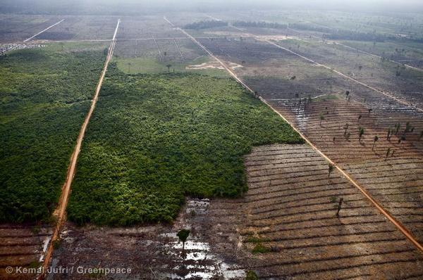Forest Destruction in Sumatra